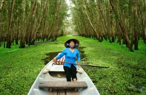 Tra Su Indigo Forest, Vietnam (during high water season)